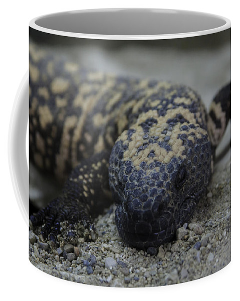 Lizard Coffee Mug featuring the photograph Gila Monster by Greg Thiemeyer