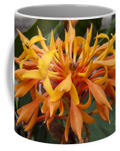 Ginger Coffee Mug featuring the photograph Ginger Flower by Darleen Stry