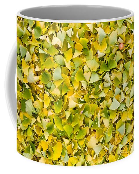 Ginkgo Coffee Mug featuring the photograph Ginkgo 2 by Steven Ralser