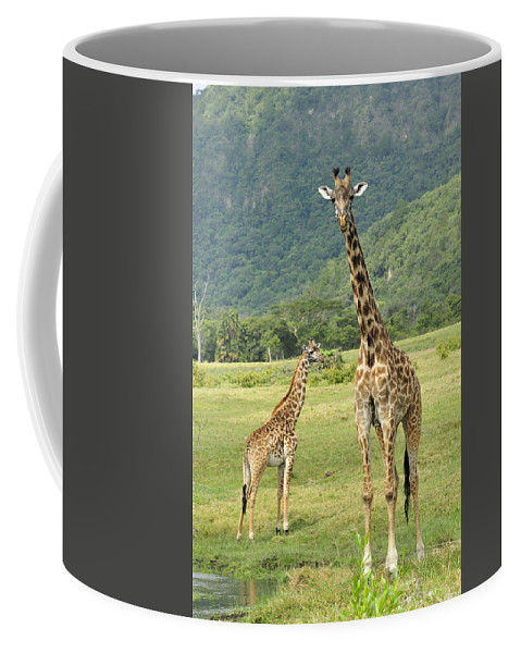 Thomas Marent Coffee Mug featuring the photograph Giraffe Mother And Calftanzania by Thomas Marent