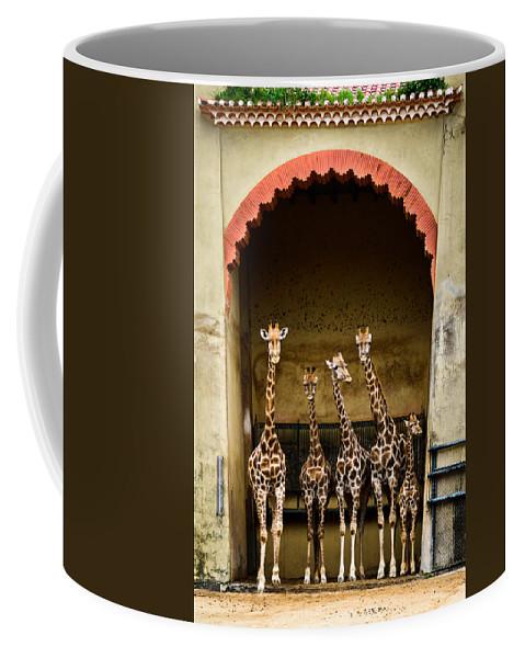 Giraffe Coffee Mug featuring the photograph Giraffes Lineup by Marco Oliveira