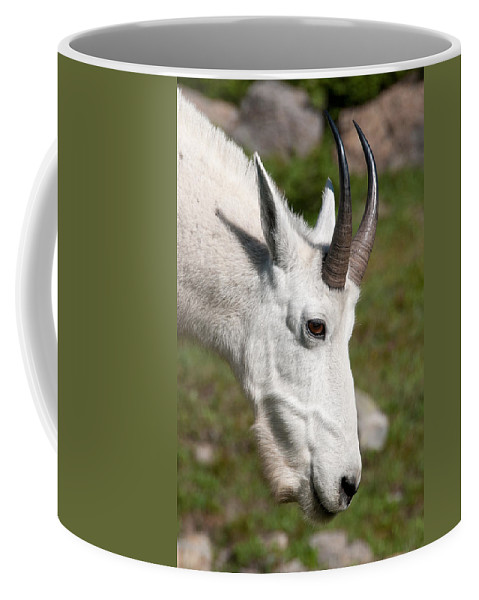 Glacier Coffee Mug featuring the photograph Glacier Goat by Steve Stuller