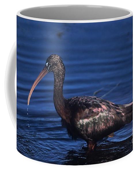 Bird Coffee Mug featuring the photograph Glossy Ibis by John Harmon