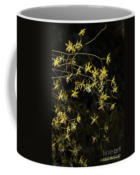 Butterfly Orchids Coffee Mug featuring the photograph Glowing Orchids by Barbara Bowen