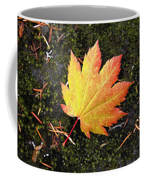 Autumn Leaves; Autumn Color; Autumn Color Change; Fall fall Color fall Color Change October Color cascade Mountains Cascades central Oregon Cascades oregon Cascades Mountains mountain Peaks volcanic Mountains cascade Range oregon; Cascade Mountains Coffee Mug featuring the photograph God's Perfect Leaf by Buddy Mays