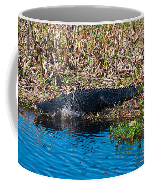 American Coffee Mug featuring the photograph Going In by Photos By Cassandra