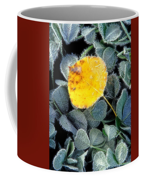 First Frost Coffee Mug featuring the photograph Gold On Green by Bill Morgenstern