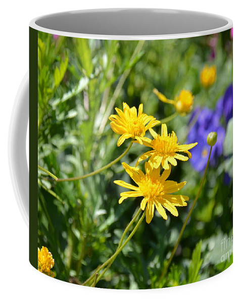 Aster Coffee Mug featuring the photograph Golden Aster by Carol Bradley