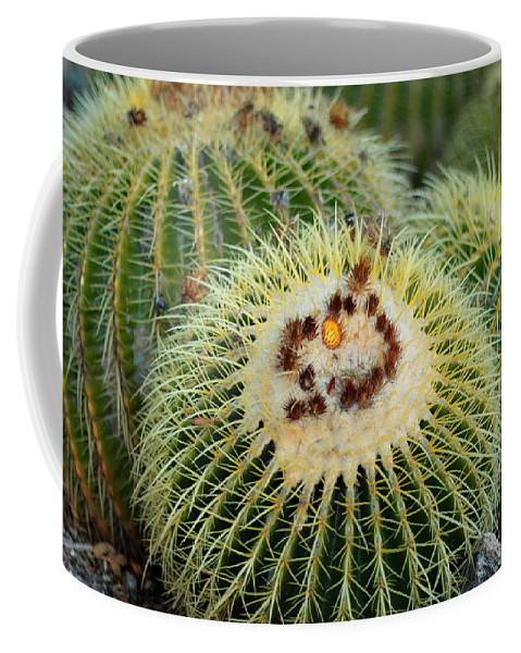 Golden Barrel Cactus Coffee Mug featuring the photograph Golden Barrel Cactus by Scott Hill