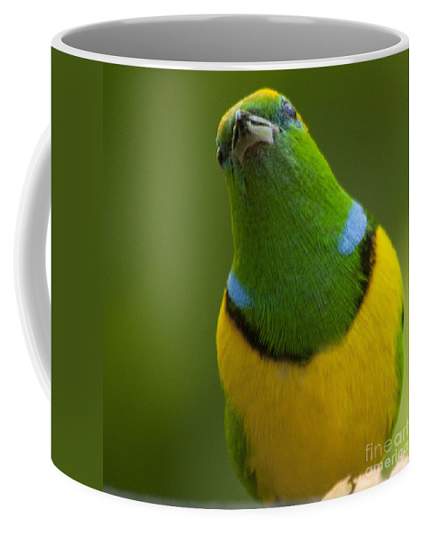 Golden Browed Chlorophonia Coffee Mug featuring the photograph Golden-browed Chlorophonia - Chlorophonia Callophrys by Heiko Koehrer-Wagner