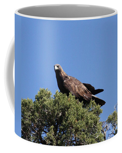 Golden Eagle Coffee Mug featuring the photograph Golden Eagle by Brandi Maher