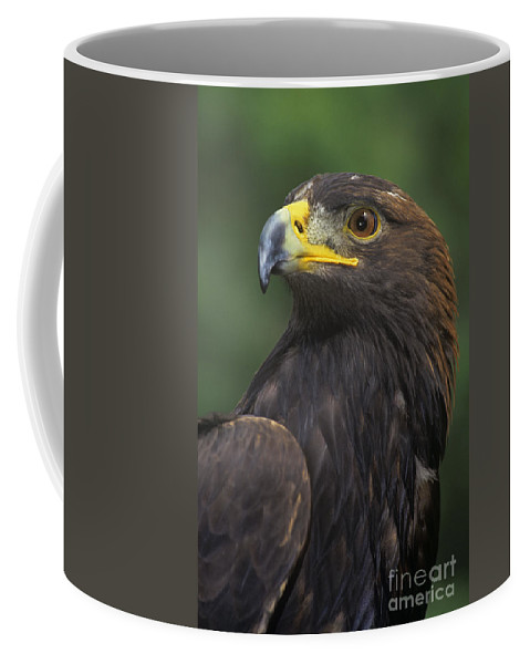 Golden Eagle Coffee Mug featuring the photograph Golden Eagle Portrait Threatened Species Wildlife Rescue by Dave Welling