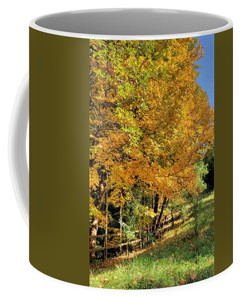 6447 Coffee Mug featuring the photograph Golden Fenceline by Gordon Elwell