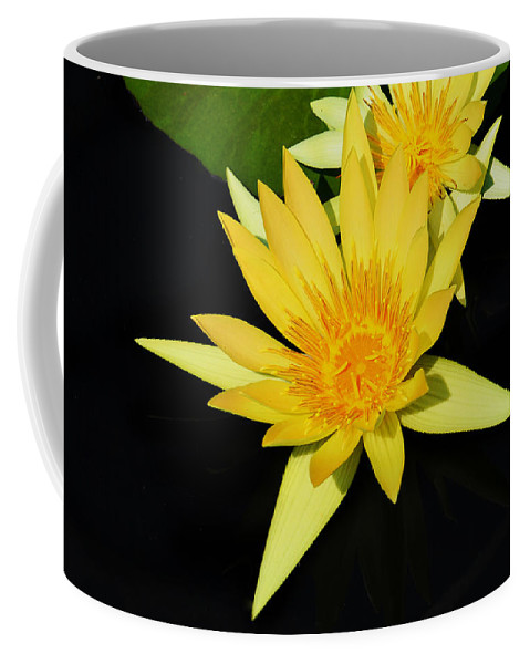 Lily Coffee Mug featuring the photograph Golden Lily by Roger Becker