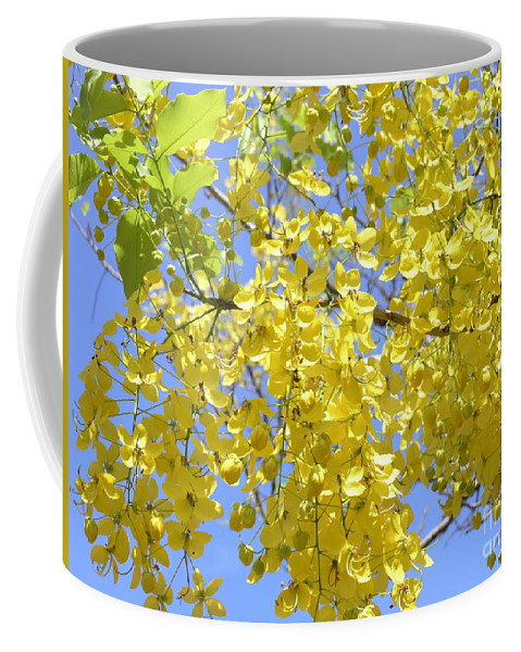 Yellow Coffee Mug featuring the photograph Golden Medallion Shower Tree by Mary Deal