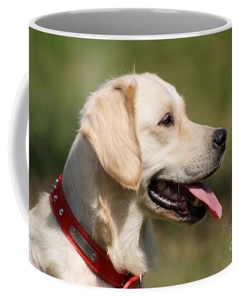 Dog; Golden Retriever Coffee Mug featuring the photograph Golden Retriever Dog by George Atsametakis