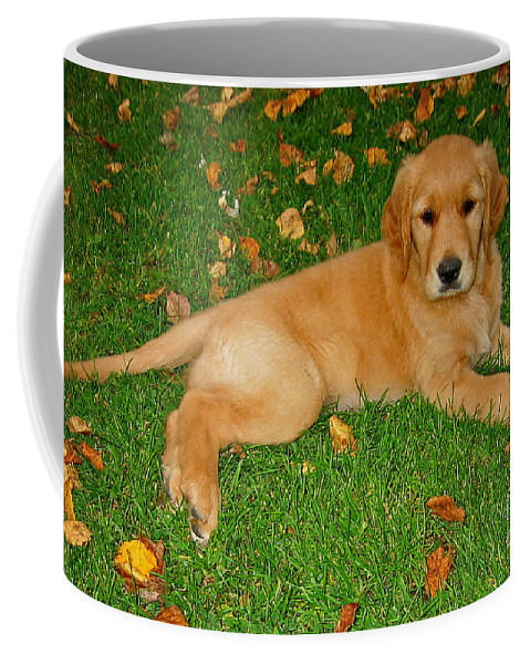 Animal Coffee Mug featuring the photograph Golden Retriever by Teresa Zieba
