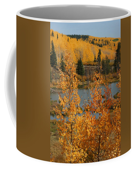 Golden Spot Coffee Mug featuring the photograph Golden Spot by Ernie Echols