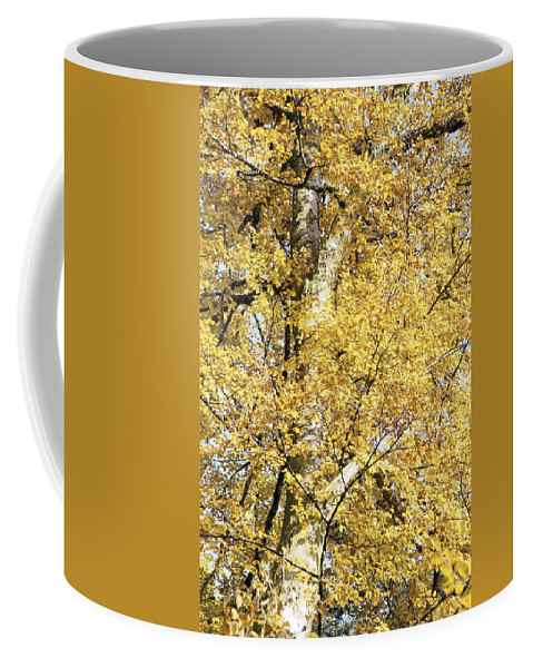 Nature Coffee Mug featuring the photograph Golden Tree by Patrick Kessler