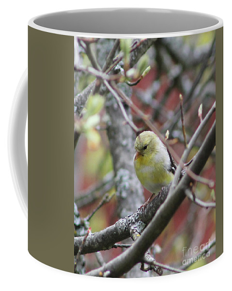 Goldfinch Coffee Mug featuring the photograph Goldfinch by Leone Lund