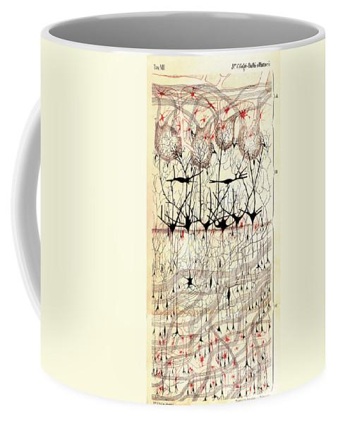 Golgi Coffee Mug featuring the photograph Golgi Olfactory Bulb Of Dog by Science Source