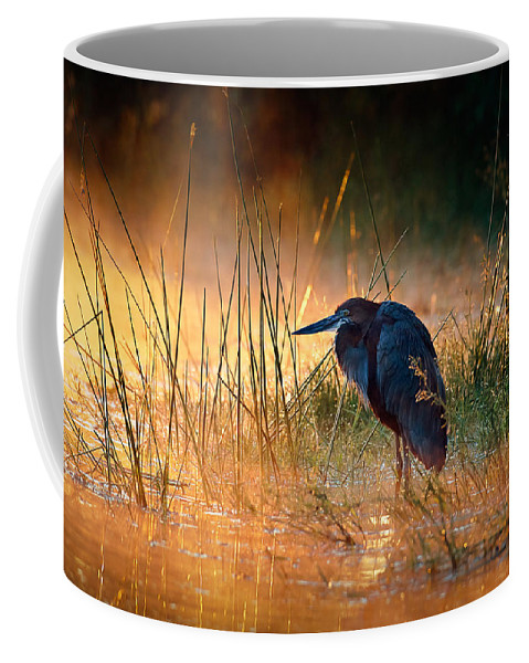 Heron Coffee Mug featuring the photograph Goliath Heron With Sunrise Over Misty River by Johan Swanepoel