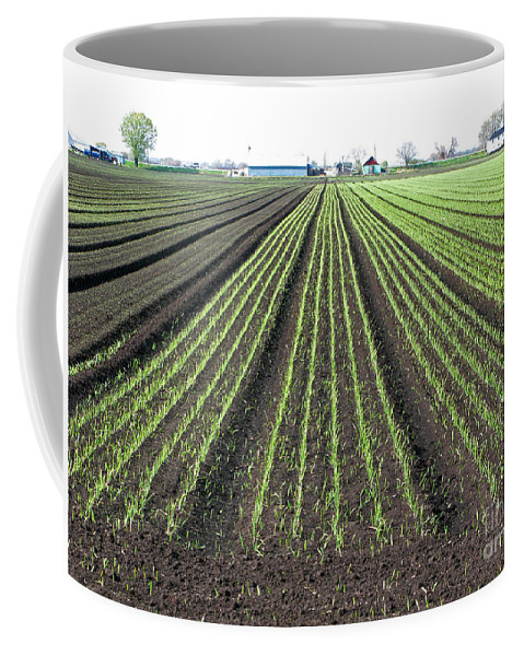 Farm Coffee Mug featuring the photograph Good Earth by Ann Horn