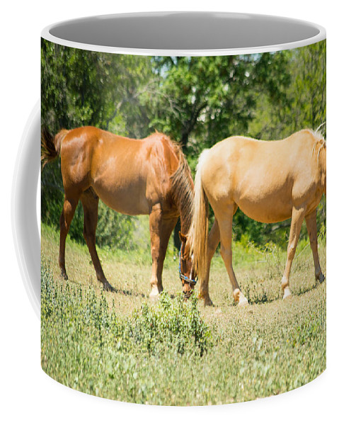 Marble Falls Coffee Mug featuring the photograph Marble Falls Texas In Good Grass by JG Thompson