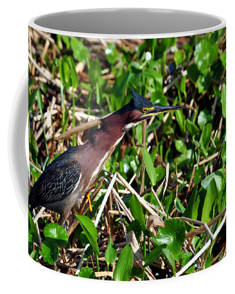 Green Heron Coffee Mug featuring the photograph Good Old Dollar Weed by Davids Digits