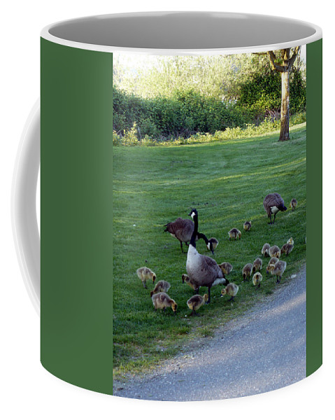 Canada Geese Coffee Mug featuring the photograph Gosling Daycare by Nicki Bennett