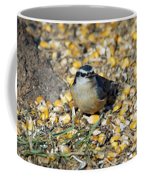 Nuthatch Coffee Mug featuring the photograph Got Food by Lori Tordsen