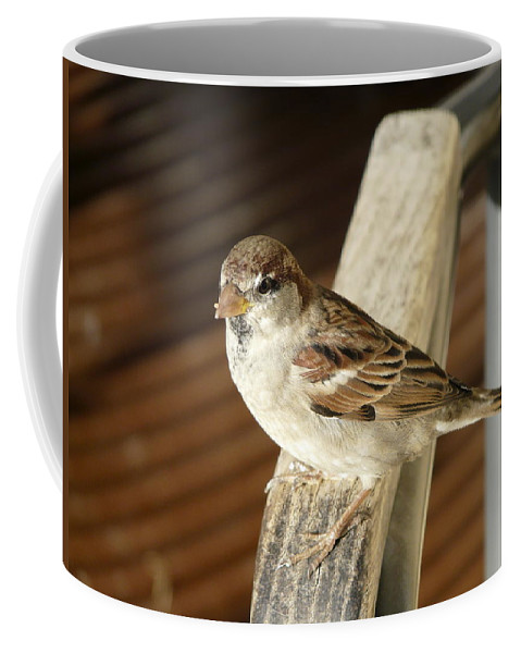 Bird Coffee Mug featuring the photograph Got Some More by Valerie Ornstein