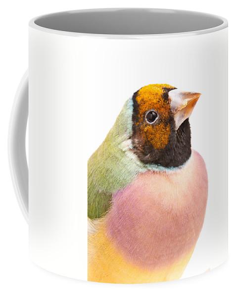 Animal Coffee Mug featuring the photograph Gouldian Finch Erythrura Gouldiae by David Kenny