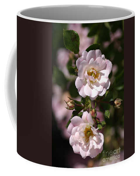 Roses Coffee Mug featuring the photograph Graceful Duo by Joy Watson