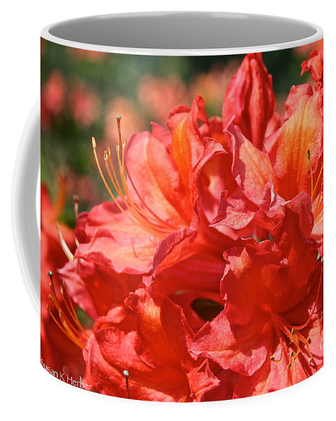Flower Coffee Mug featuring the photograph Grade A Azalea by Susan Herber