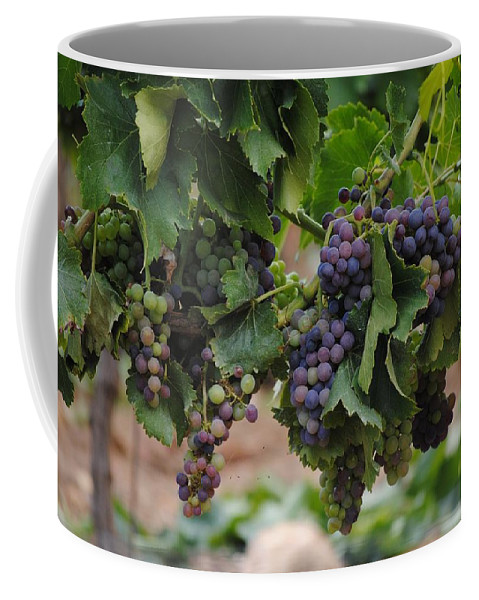 Grapes Coffee Mug featuring the photograph Grapes On Vine by FL collection