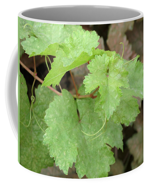 Grapevine Coffee Mug featuring the photograph Grapevine by Laurel Powell