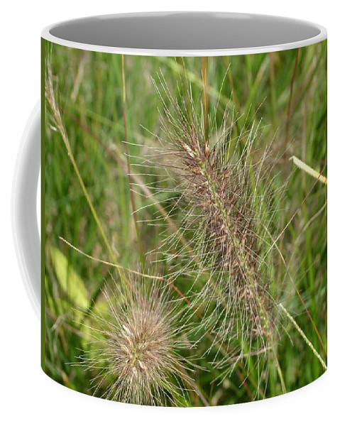 Grass Coffee Mug featuring the photograph Grasses At Spaulding Pond by Geoffrey McLean