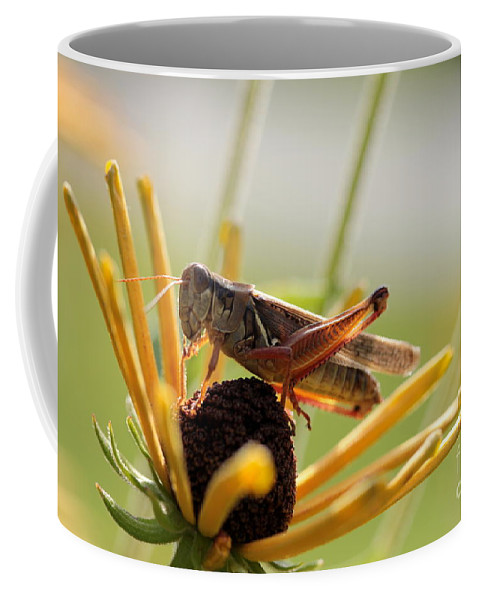 Grasshopper Coffee Mug featuring the photograph Grasshopper Antenna Down by Kenny Glotfelty
