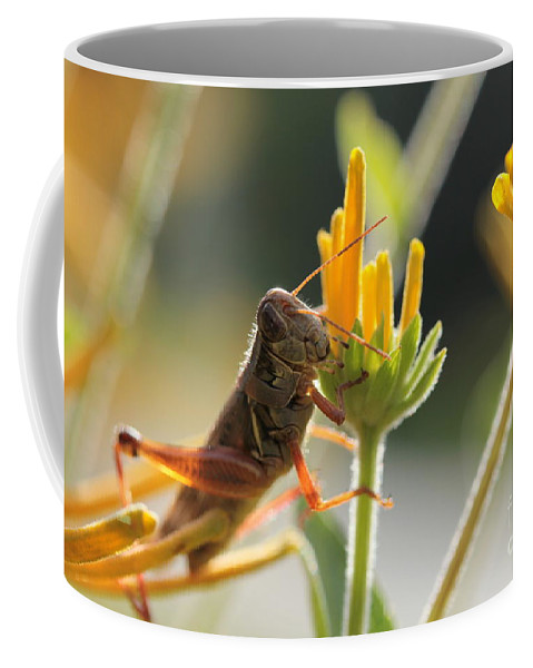 Grasshopper Coffee Mug featuring the photograph Grasshopper Delight by Kenny Glotfelty