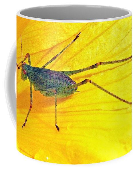 Grasshopper Coffee Mug featuring the photograph Grasshopper by FL collection