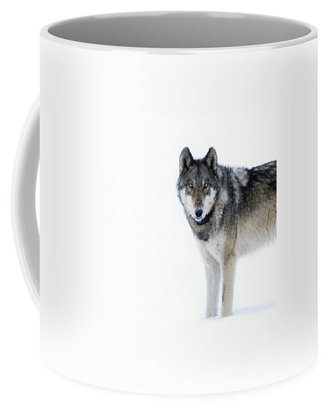 Wolf Coffee Mug featuring the photograph Gray Wolf by Deby Dixon