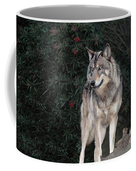 Gray Wolf Coffee Mug featuring the photograph Gray Wolf Endangered Species Wildlife Rescue by Dave Welling
