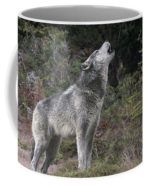 Gray Wolf Coffee Mug featuring the photograph Gray Wolf Howling Endangered Species Wildlife Rescue by Dave Welling