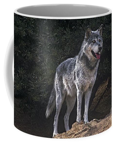 Gray Wolf Coffee Mug featuring the photograph Gray Wolf On Hillside Endangered Species Wildlife Rescue by Dave Welling