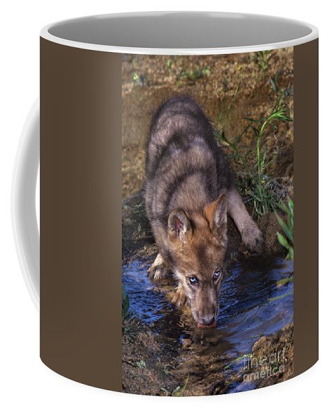 Gray Wolf Coffee Mug featuring the photograph Gray Wolf Pup Endangered Species Wildlife Rescue by Dave Welling