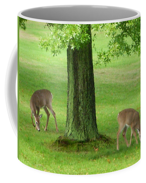 Deer Coffee Mug featuring the photograph Grazing by Aimee L Maher ALM GALLERY