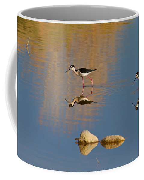 Bird Coffee Mug featuring the photograph Grazing Stilts by John Absher