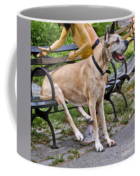Dog Coffee Mug featuring the photograph Great Dane Sitting On Park Bench by Madeline Ellis