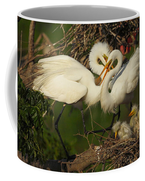 Great Egret Coffee Mug featuring the photograph Great Egret 2am-7177 by Andrew McInnes